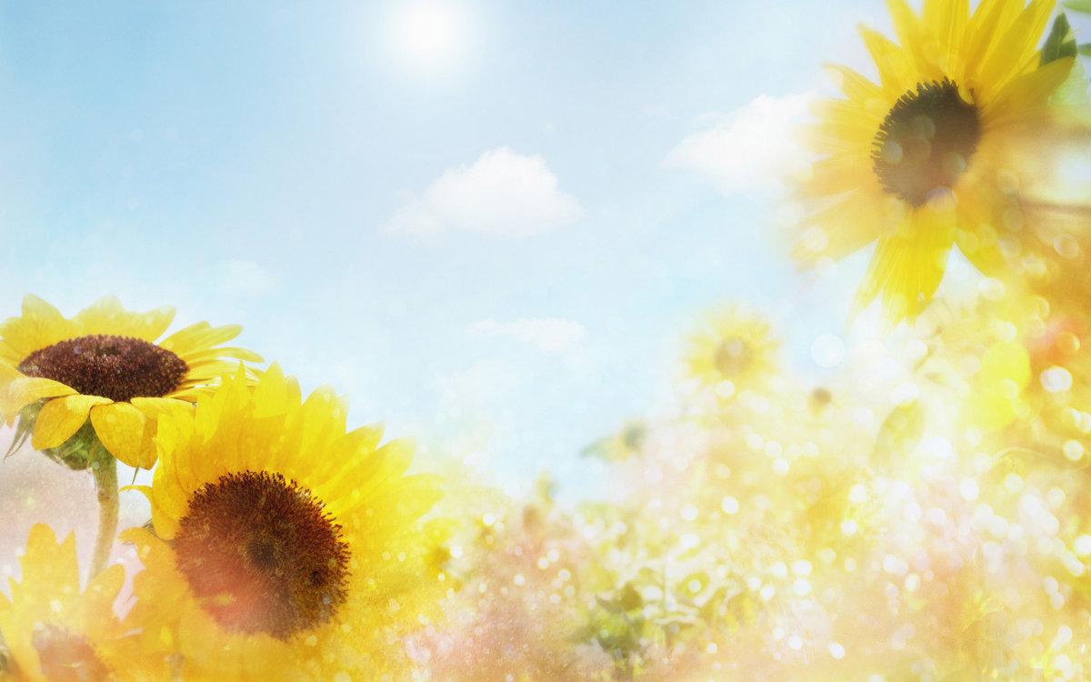 Цветы, открытки фоны солнечные