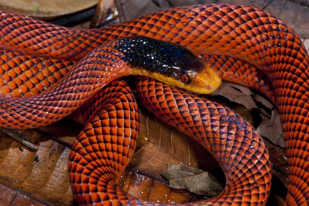 Самая красивая змея картинки