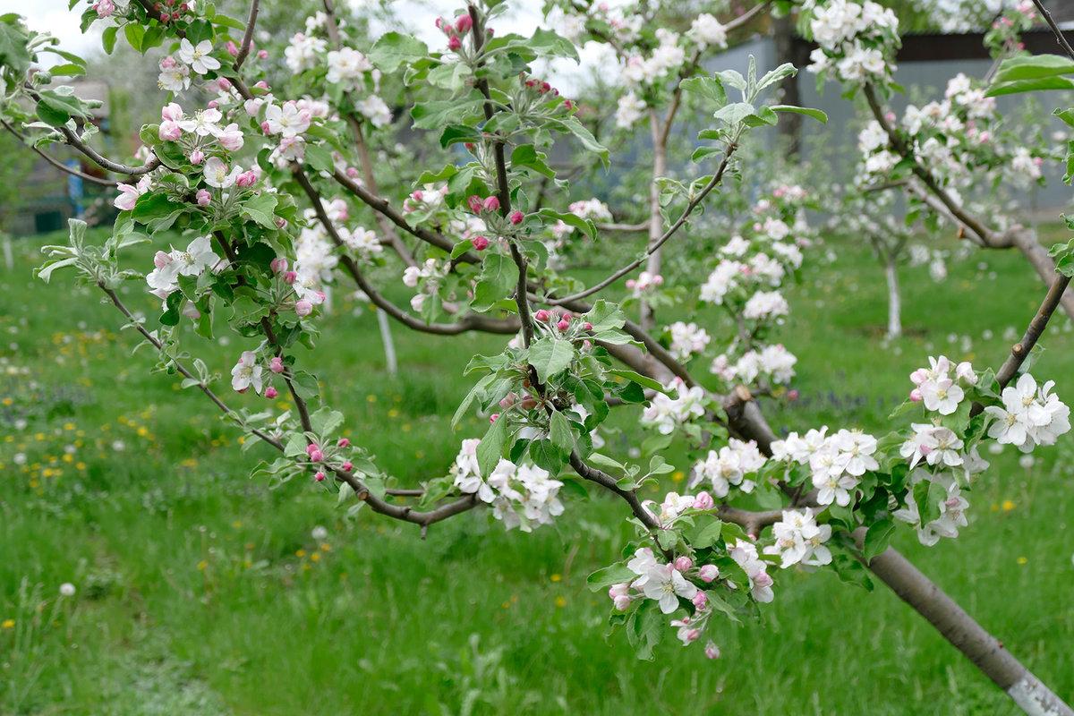 для картинки когда цветут сады дагестанского орнамента впечатляет