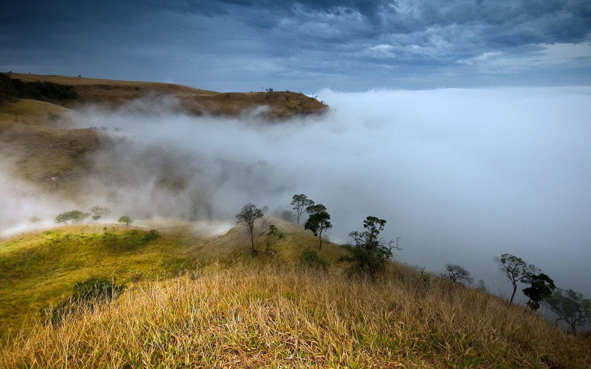 Прикольные, картинка тумана в природе