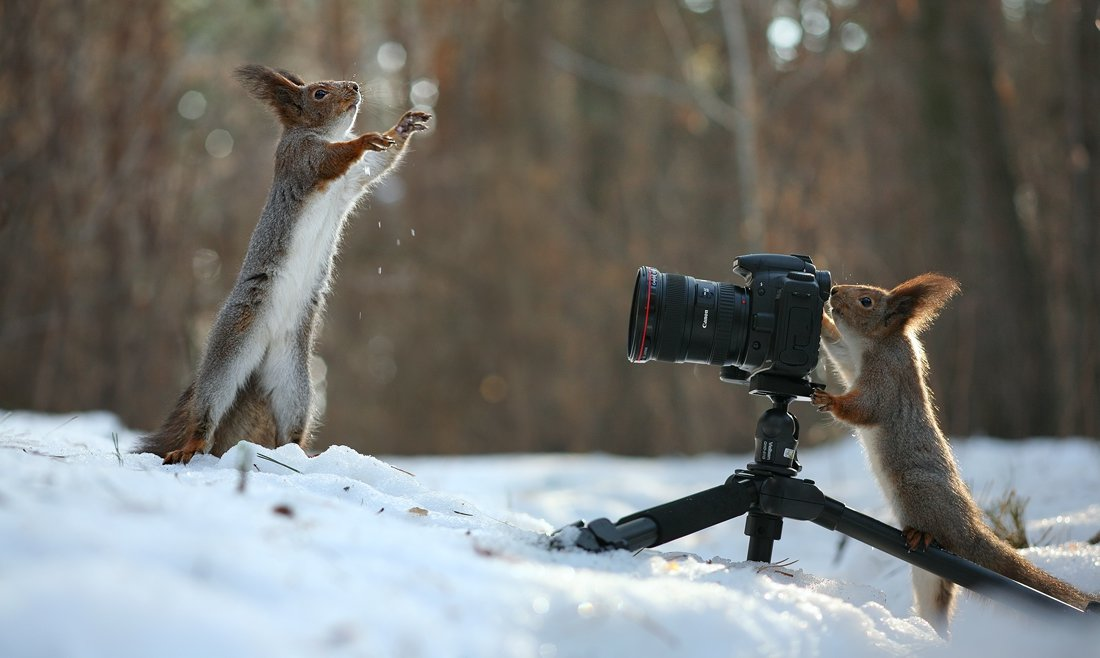 Смешные картинки фотографа с фотоаппаратом