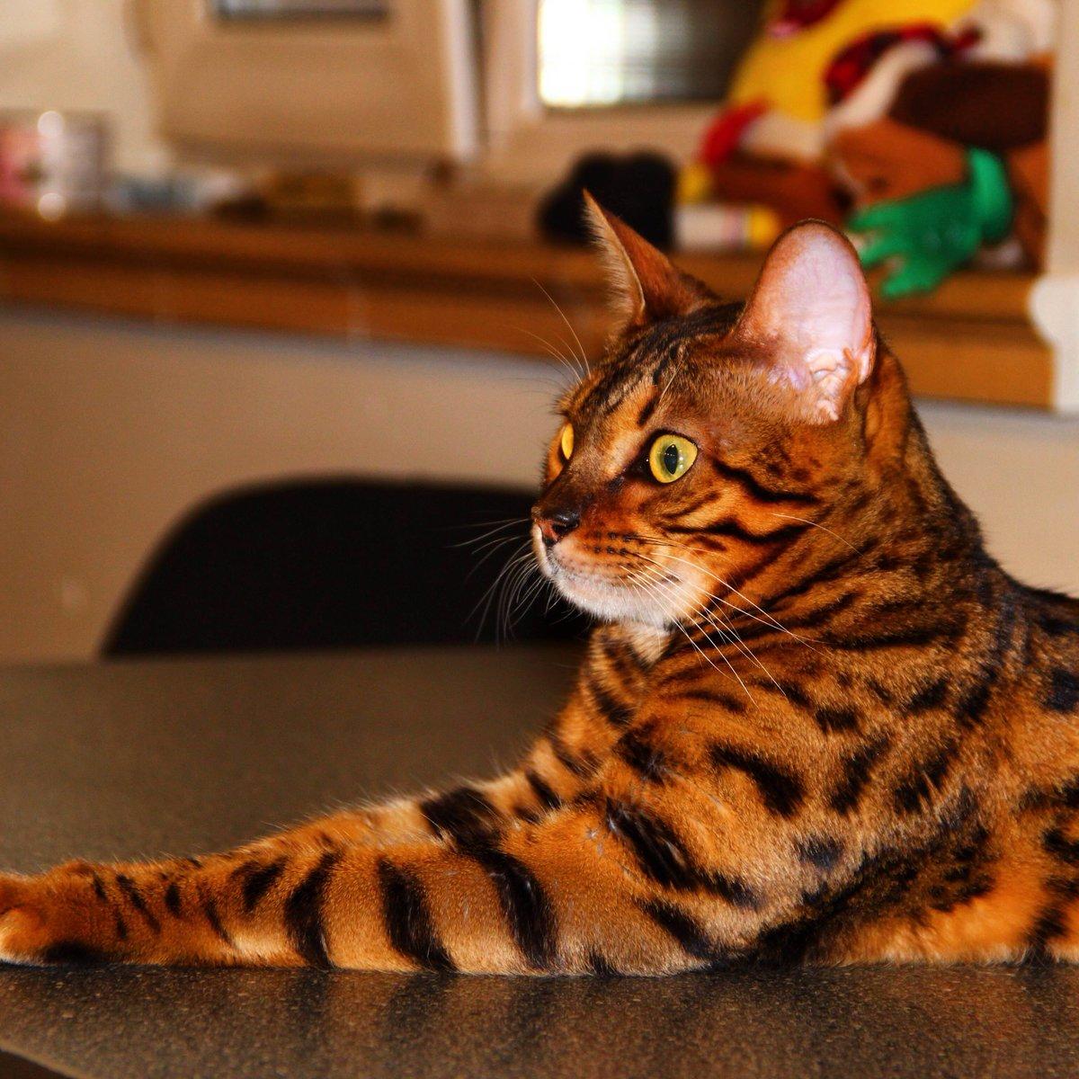 Коты фото красивые породы