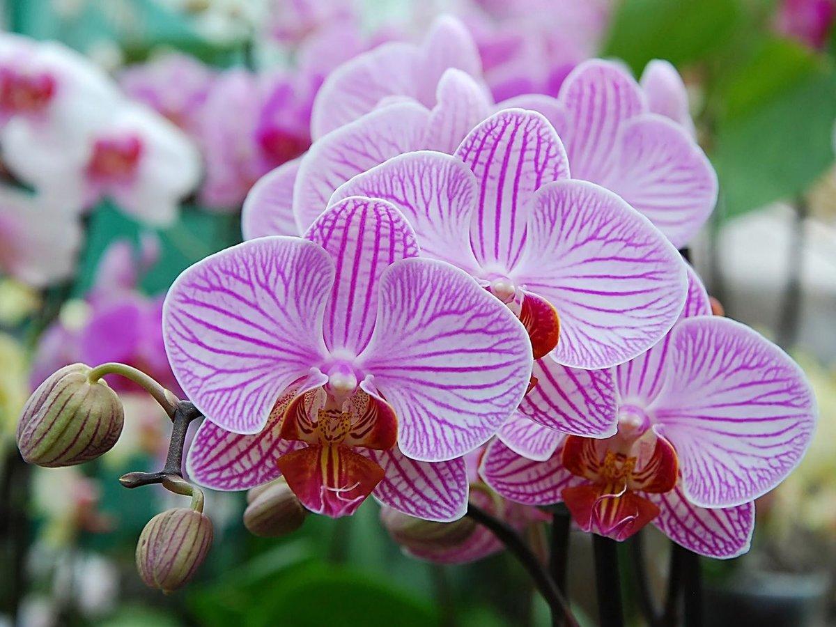 Днем лесной, открытка орхидеи фото