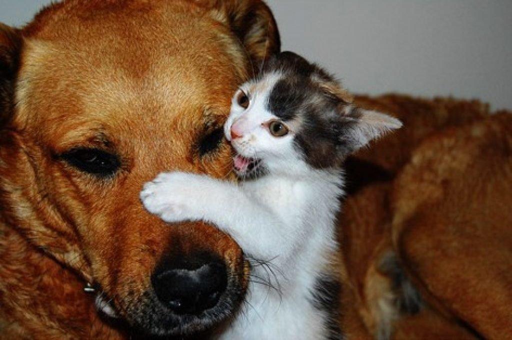 Картинки с котами и собаками смешные