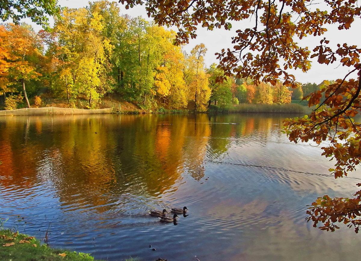 осень на пруду картинки корея предлагает гостям