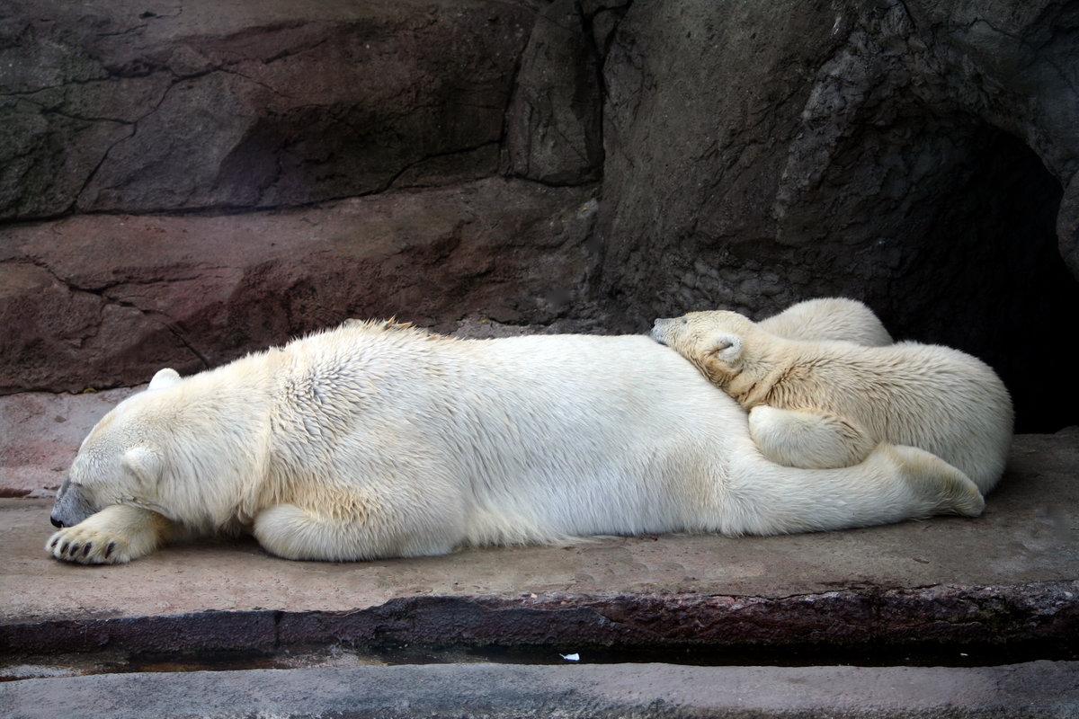 Открытки беларусь, картинки московского зоопарка животные