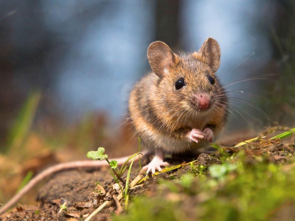 Картинка для мыши