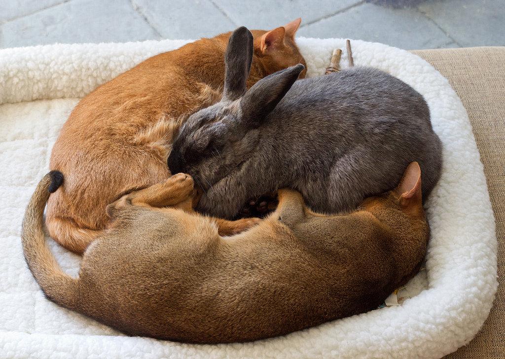 фото котенок спит с кроликом стоит
