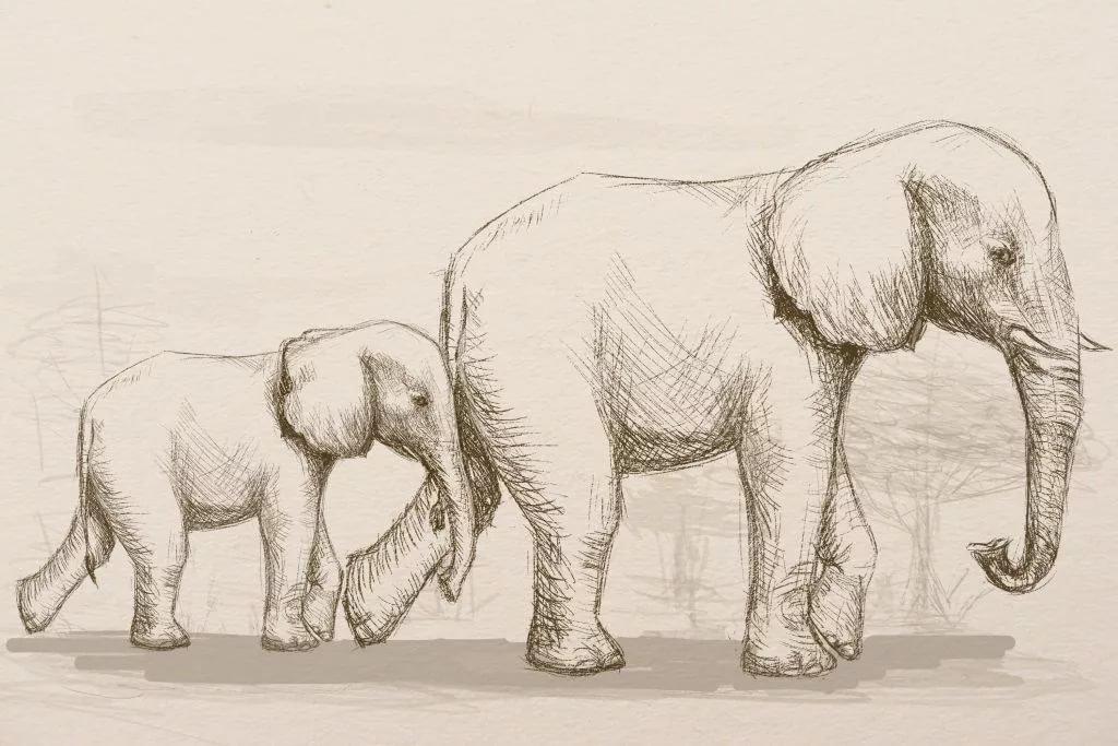 желании смотреть картинки как нарисовать слона также