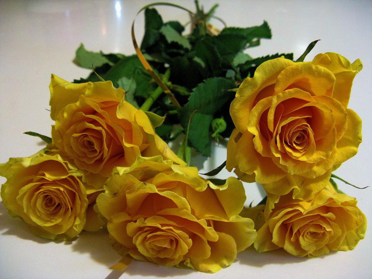 букет желтых роз фото анимационные здесь весьма молода