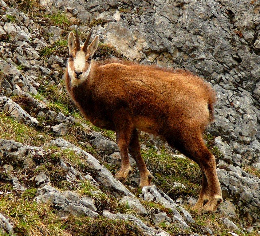 хотели, чтобы животный мир гор фото программе