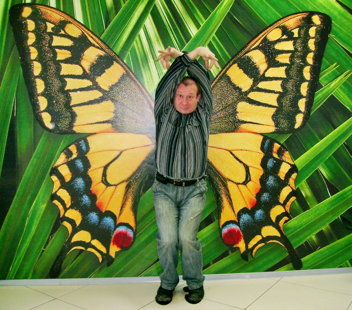 Сделать, смешные картинки с бабочками