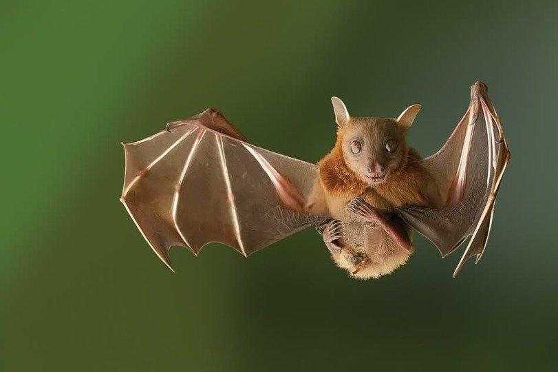 Прикольная картинка летучая мышь, картинки днем рождения