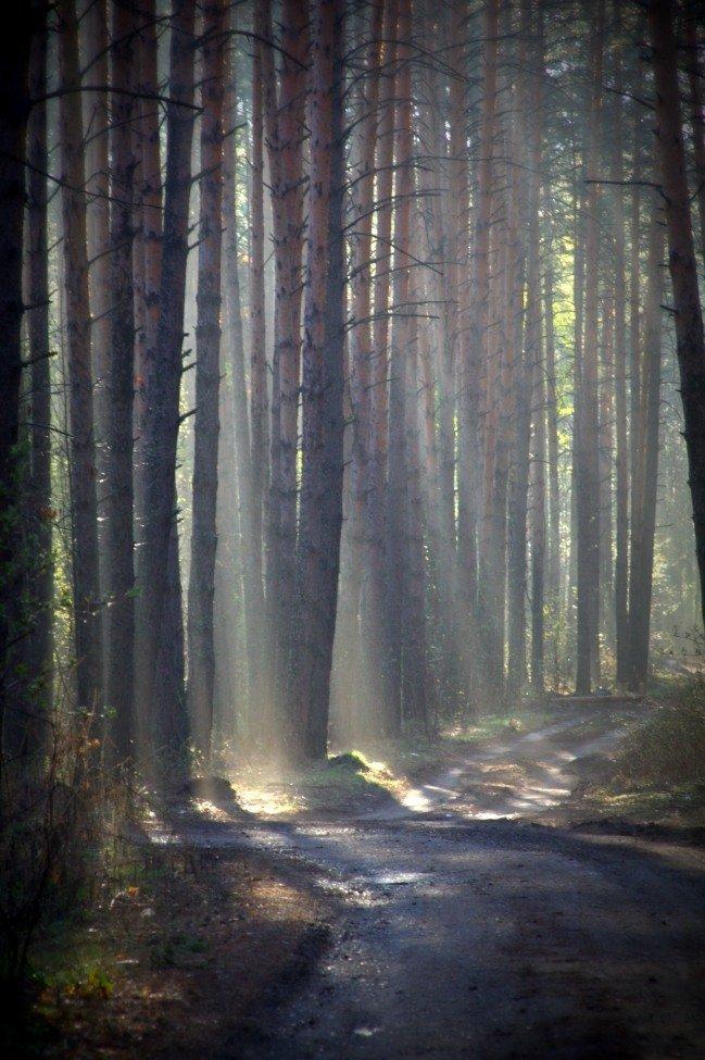 актера фото в лесу после дождя вагонах