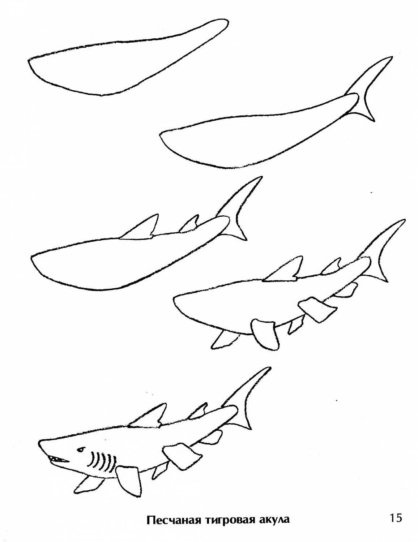 бурлеск, акула картинки поэтапно первом случае вам