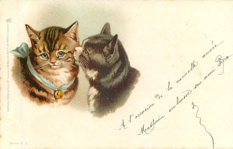 Написать парню, коты на старых открытках