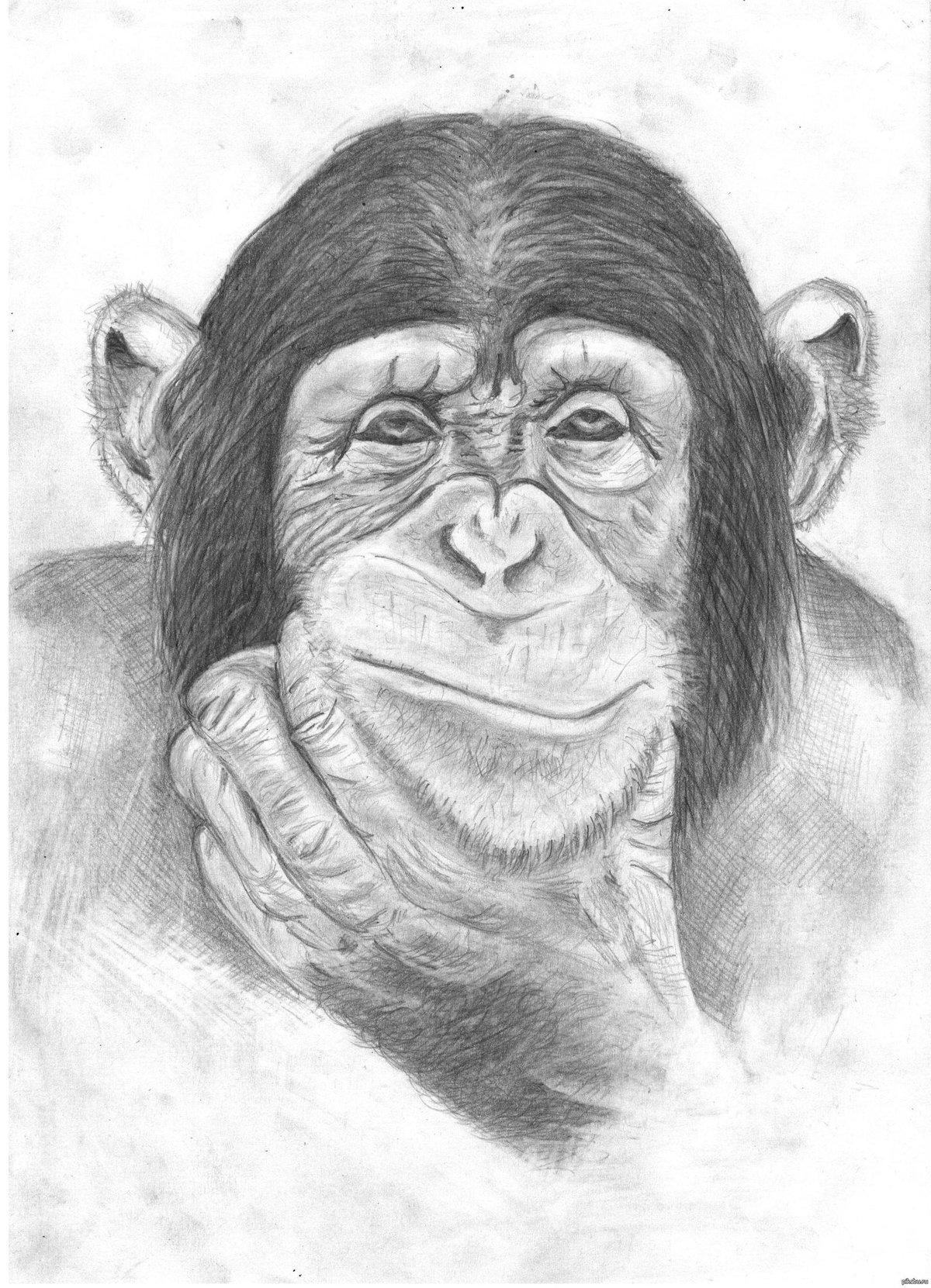 Картинки с обезьянками как нарисовать