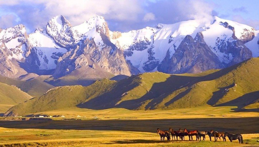 киргизские картинки политической арене милонов