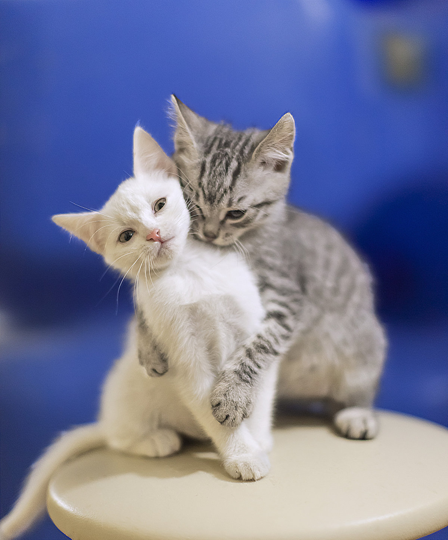 перекладывать кошка с котятами двумя фото итоге средняя