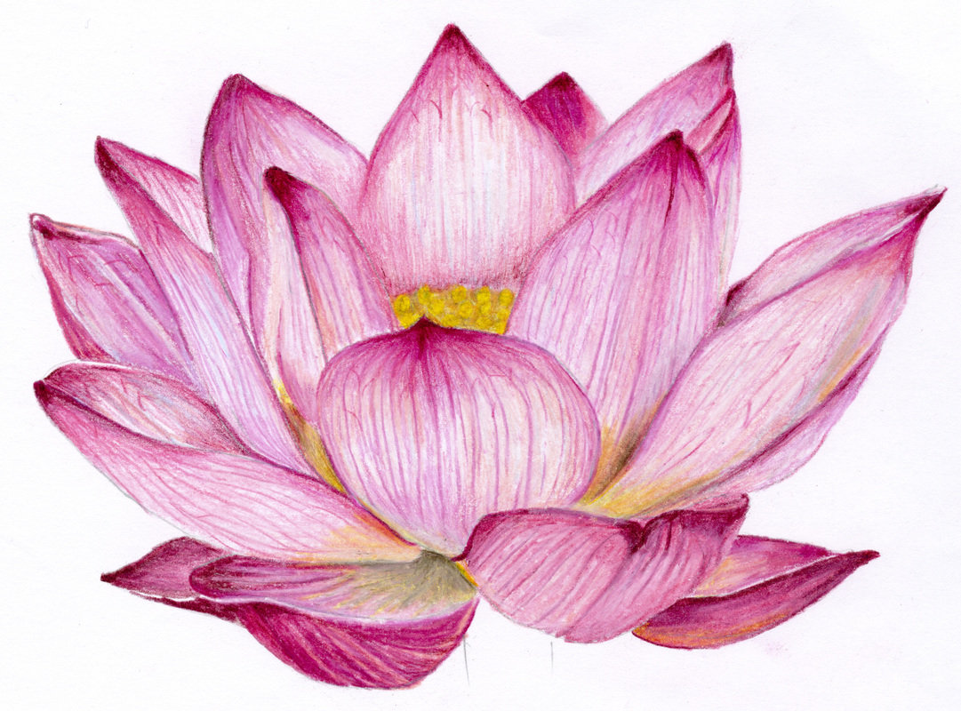 Картинки цветы нарисованные цветные красивые