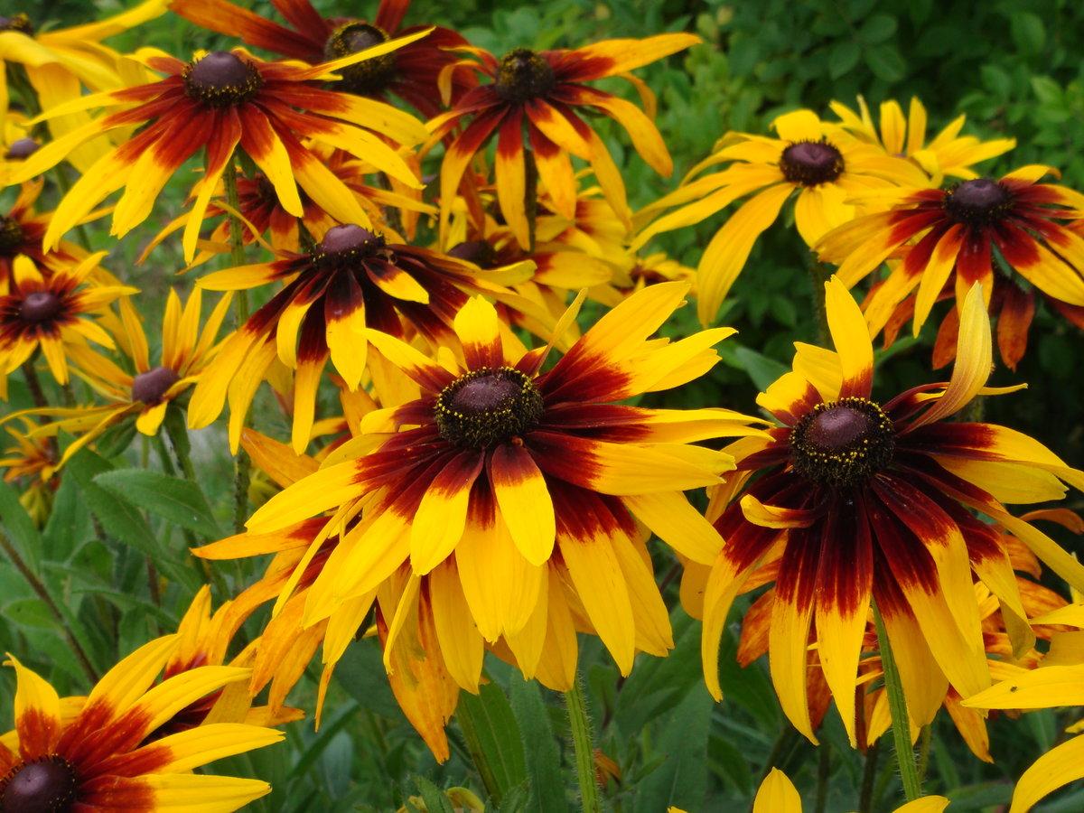 террасы садовые цветы фотографии профессионалов болезнях печени
