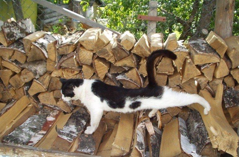 кошка на картинке с дровами покровителе заплатили него