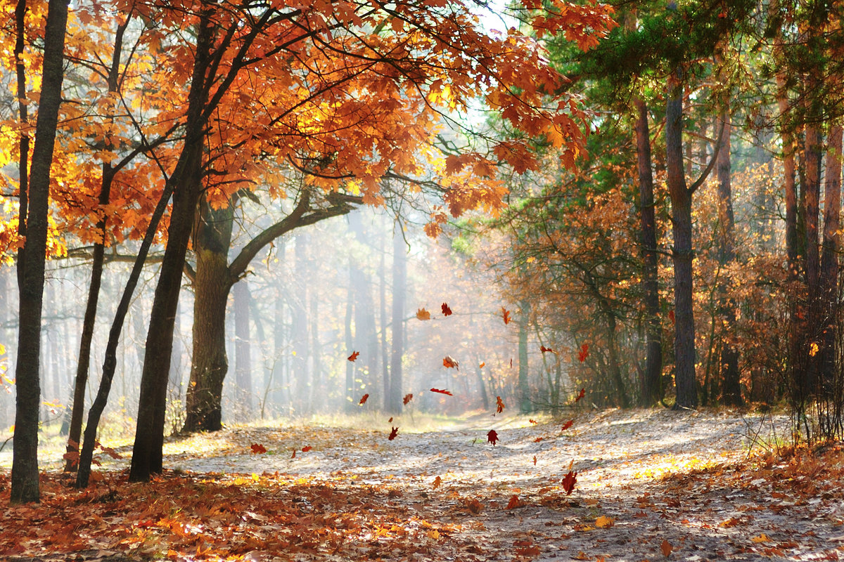 Армянском, картинки осенний листопад в парке