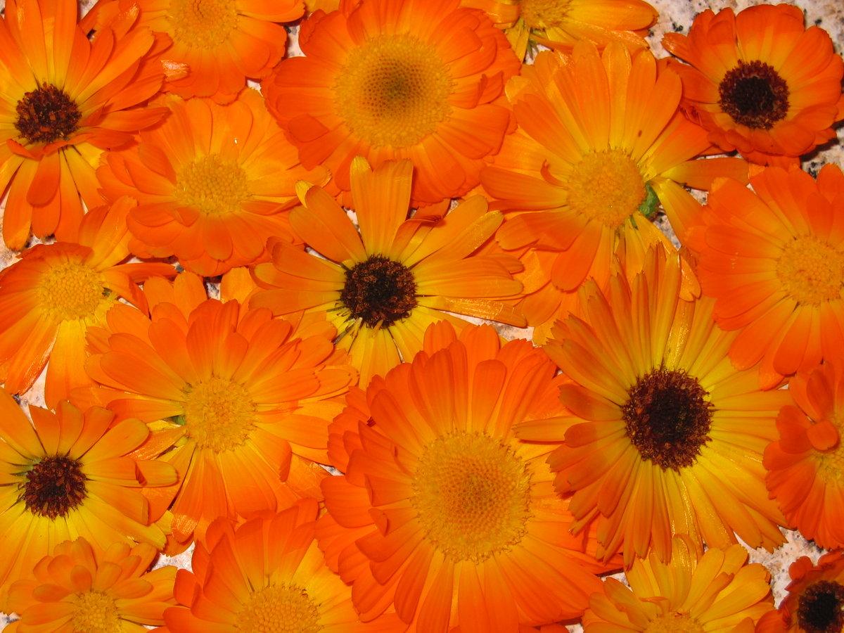 Моей милой, оранжевое настроение картинки