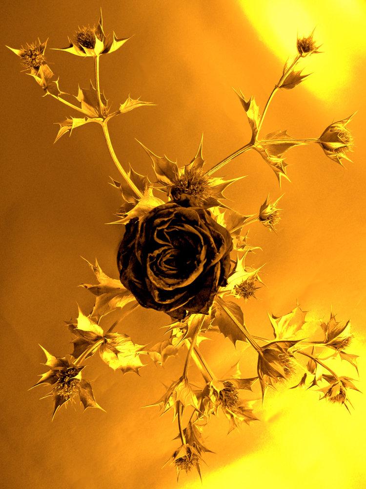 Чертополох и роза картинки