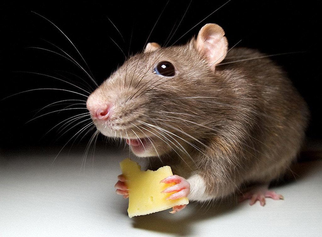 Рекламы, смешные картинки с мышкой