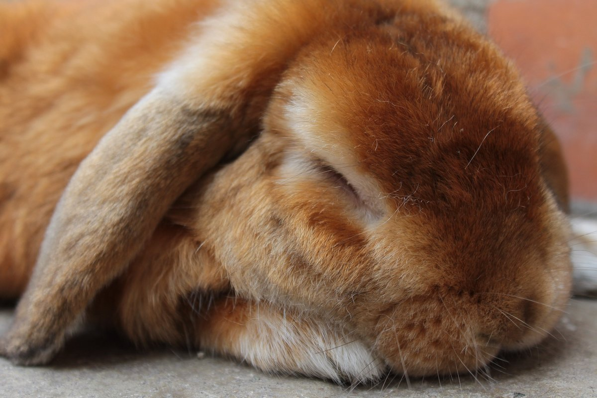 Уставший заяц картинка