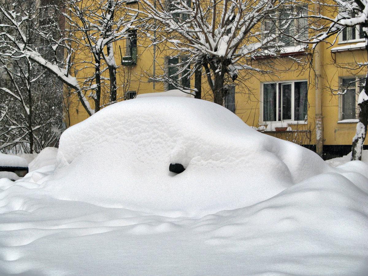 картинки много снега в городе тигра характеристика