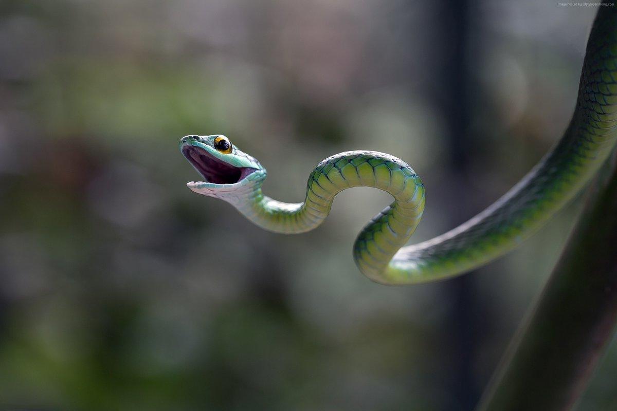 Мамбу Змеи