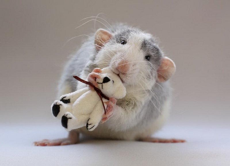 Картинка прикольной мышки, руками