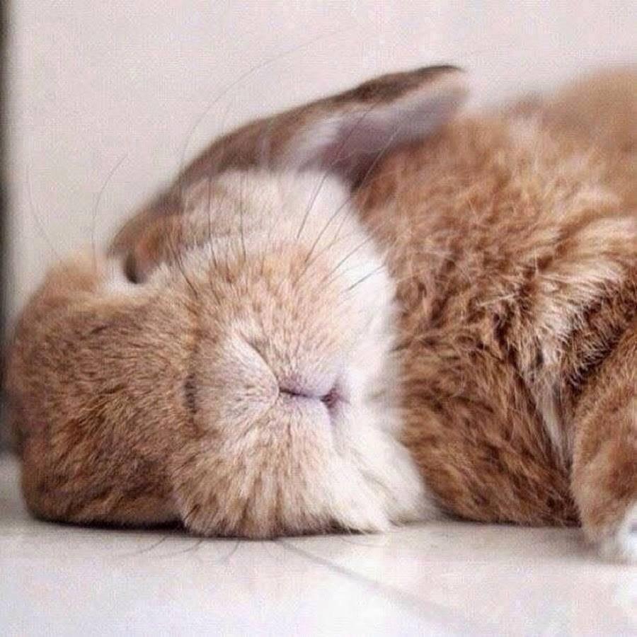 Открытку нарисовать, смешные картинки с зайцами доброе утро