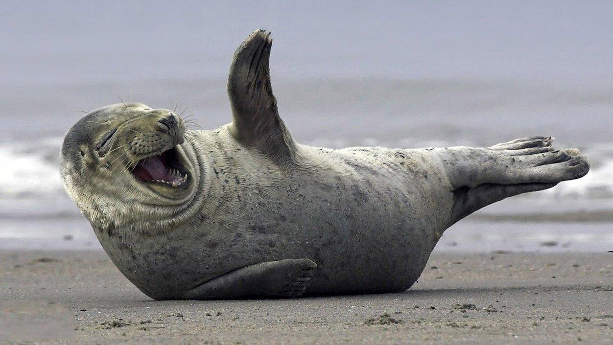 Д.р, картинки тюлень смешной