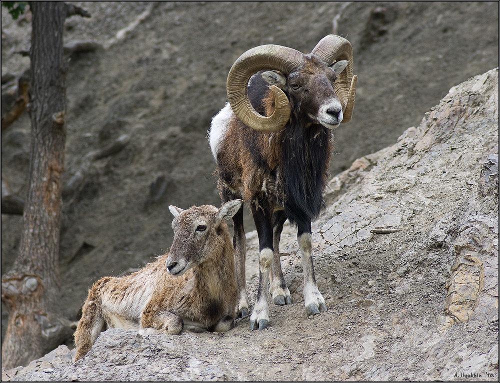 Животные в крыму с картинками