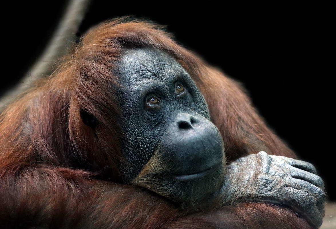 вот картинки грустная обезьяна нужно найти требуемый