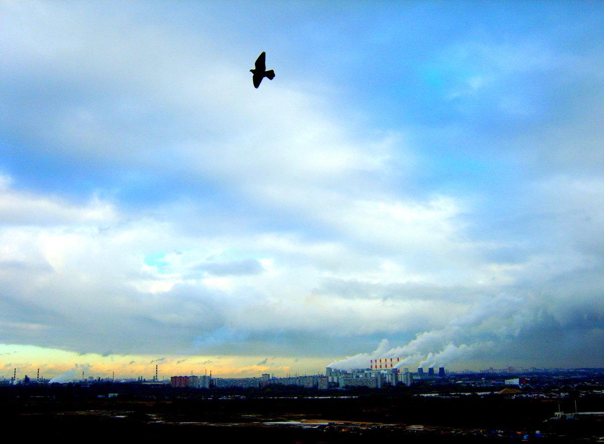 Мирного неба над головой фото сети