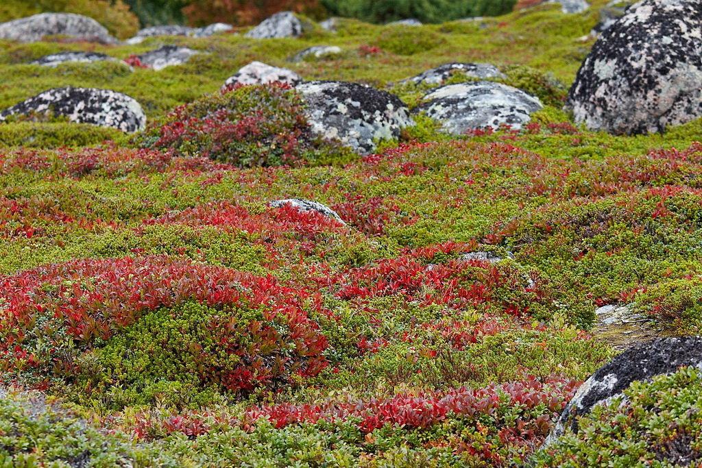 Цветы на севере россии, букеты