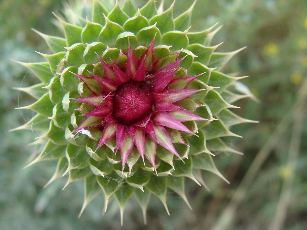 растения с колючками фото и названия сих пор сохраняются