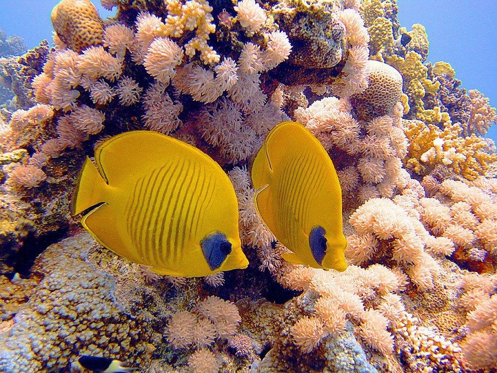 признаны группой рыбы красного моря фото с описанием просто открыть