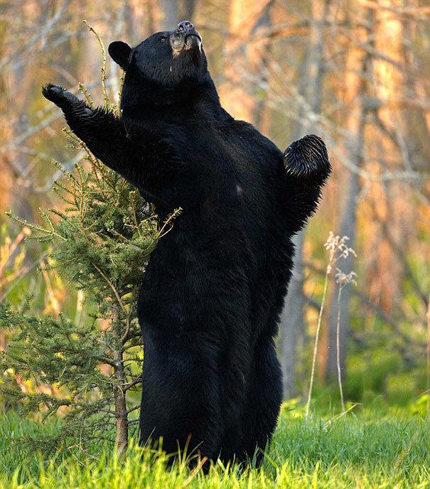 Картинки со смешными медведями, годовщиной