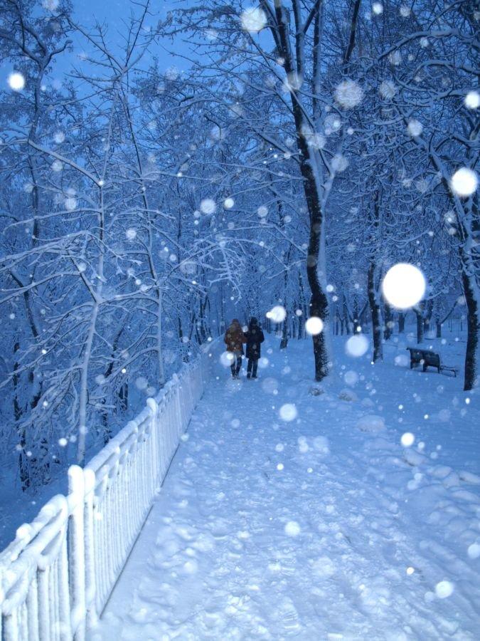 Для, зимний парк гифка