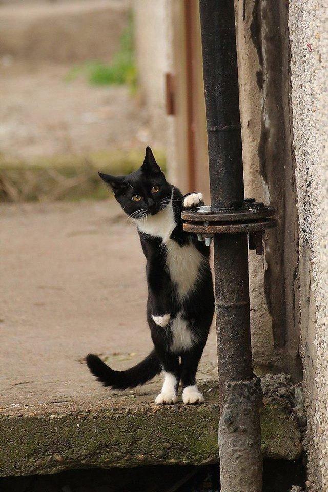 Картинки осторожно смешной котенок