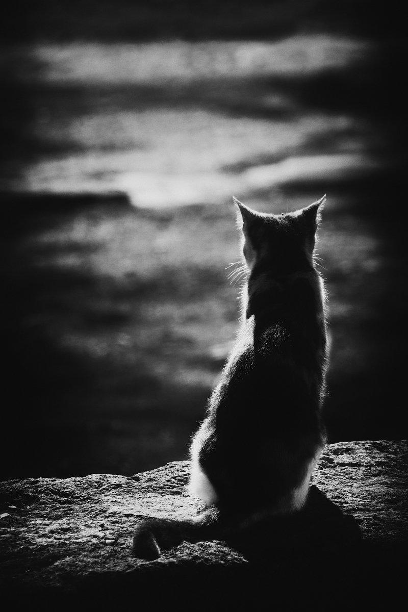 Одинокая кошка в картинках