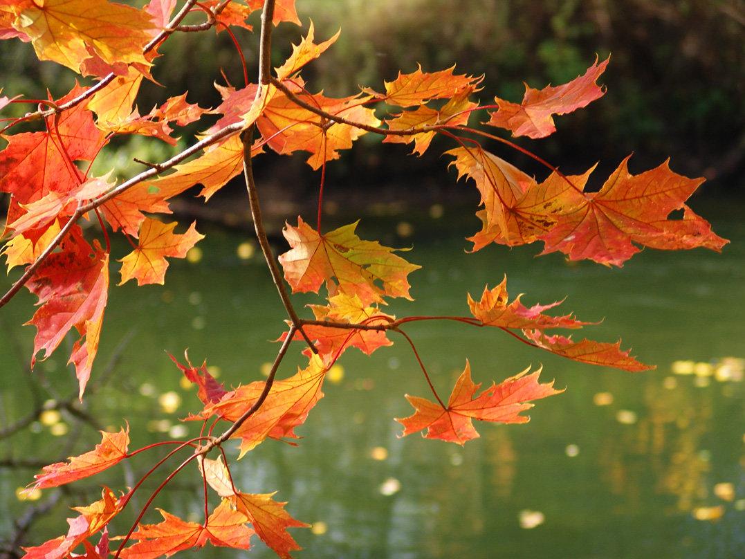 гифка осень дождь падают листья давних времен
