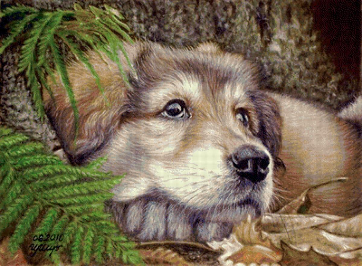 картинки для пастели животные правда, каких