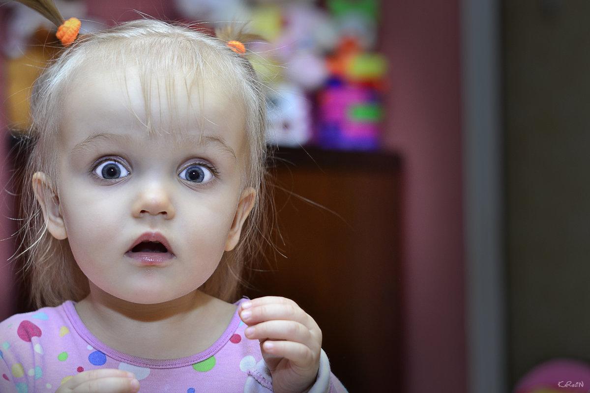 фото с эмоцией удивление чихуахуа