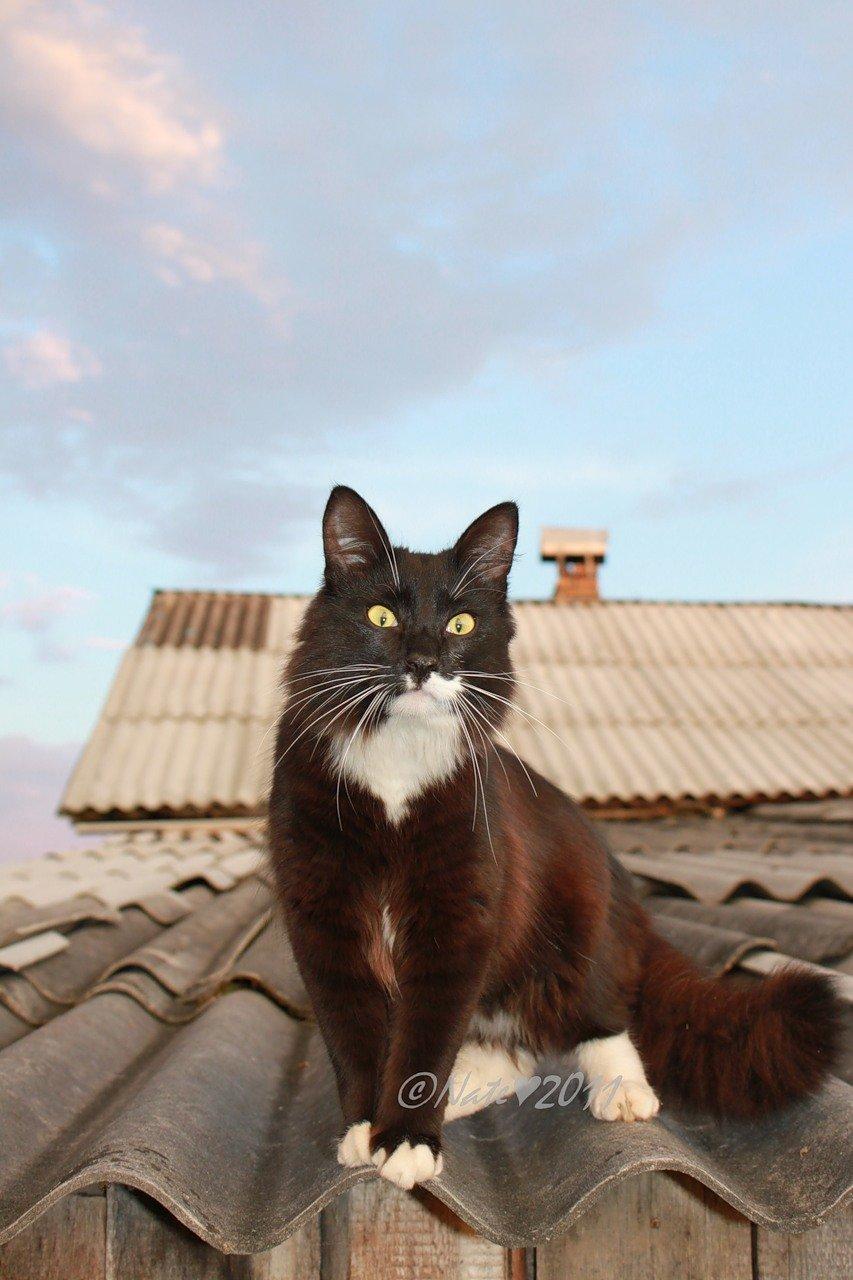 море фото кота на крыше чем нырять